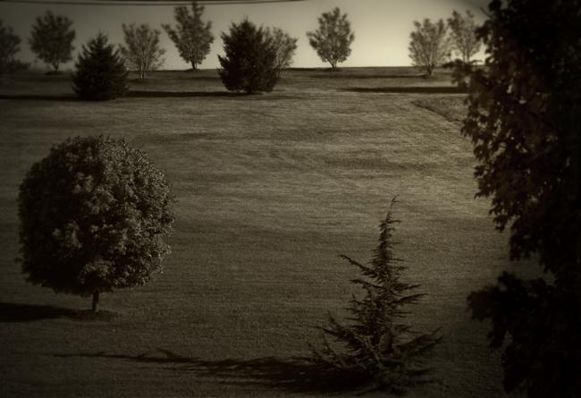 Landscape 650x445