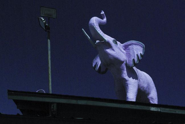 Elephant at Night 650x437